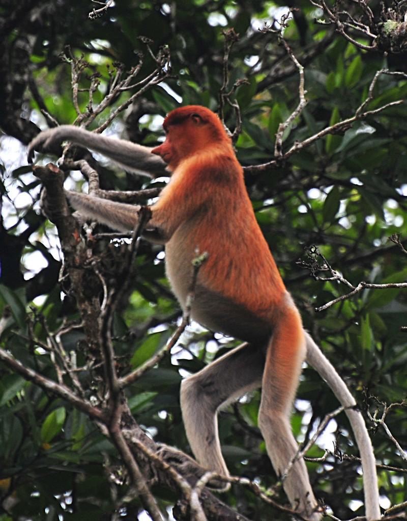 mar 27 0469 standing monkey