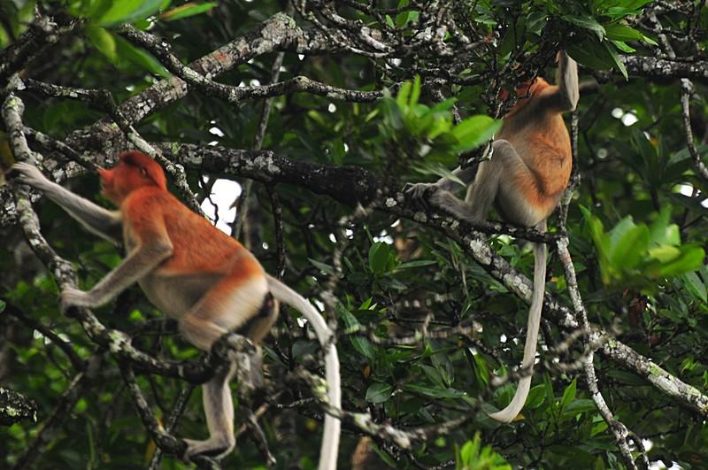 mar 27 0482 2 monkeys