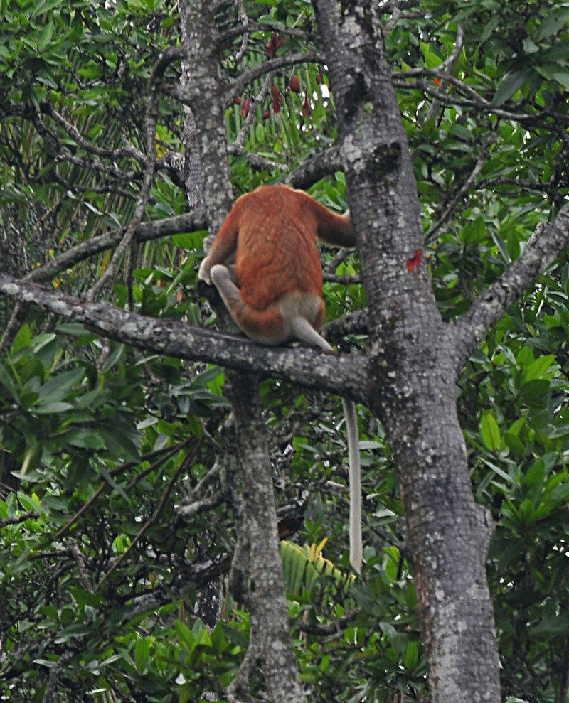 "mar_27_0878_monkey_back - ""Leave me alone..."" - Photos Unlimited"