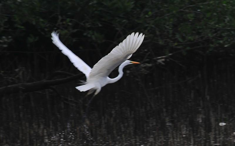 mar 27 1137 white bird flying