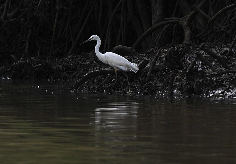mar 27 1164 white bird reflection