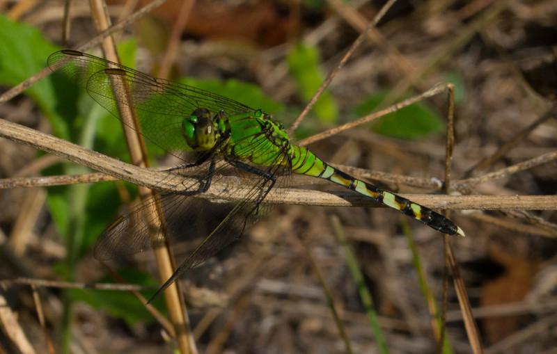 mar 27 3174 dragonfly