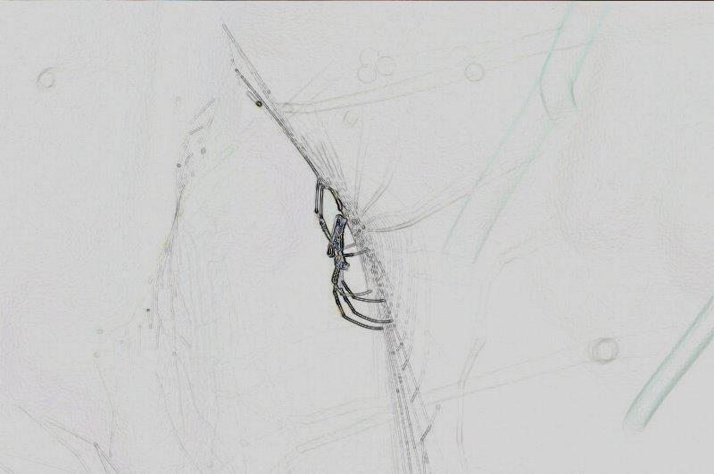 mar 28 6467 nephila web sobel inversion