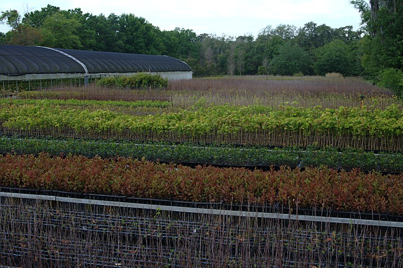 mar_29_1851_spring_crop.jpg