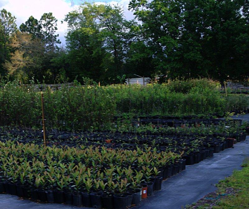 mar_29_1981_behind_plants.jpg