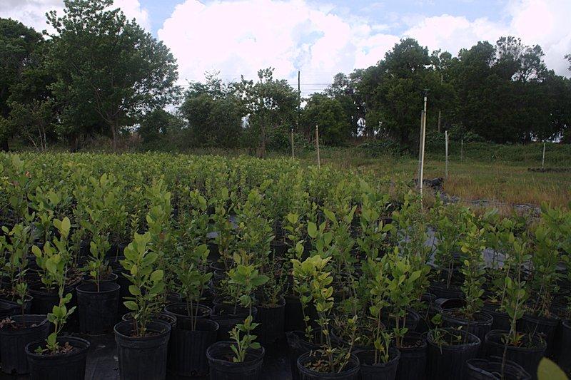 mar 31 2284 north plants