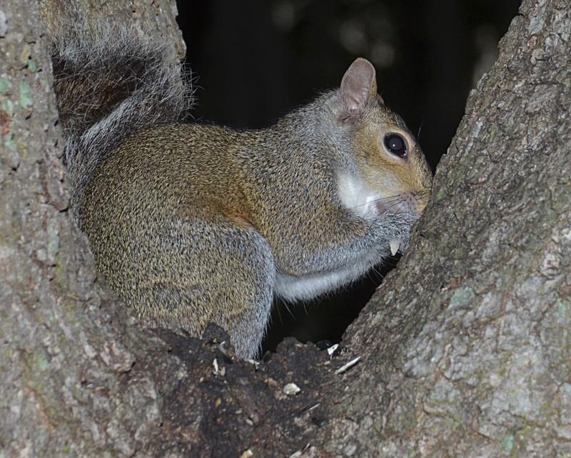 mar 31 8766 squirrel eating