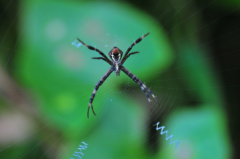 may 01 6754 argiope