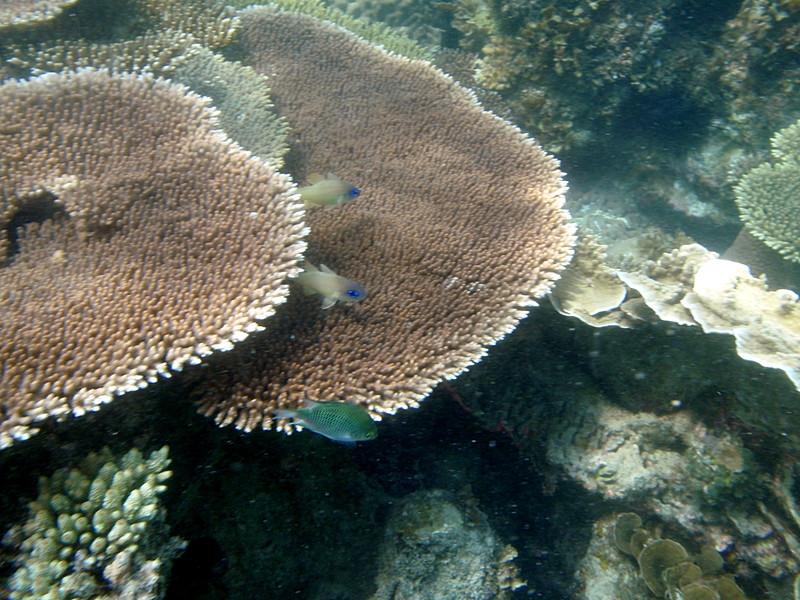may 02 0120 fish coral