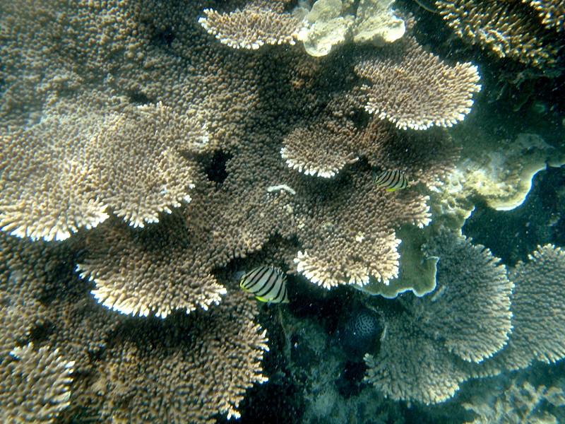 may 02 0132 unk reef fish