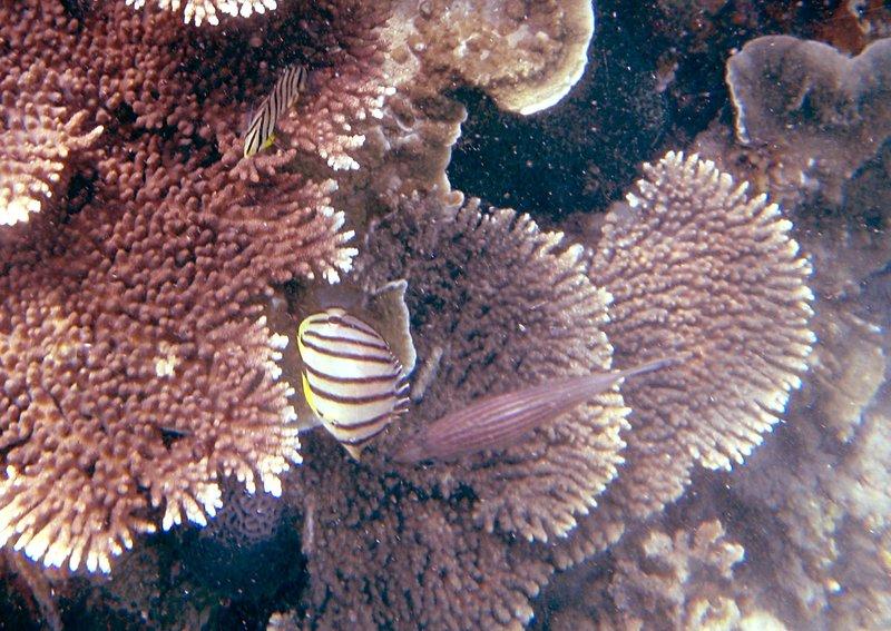 may 02 0133 reef fish
