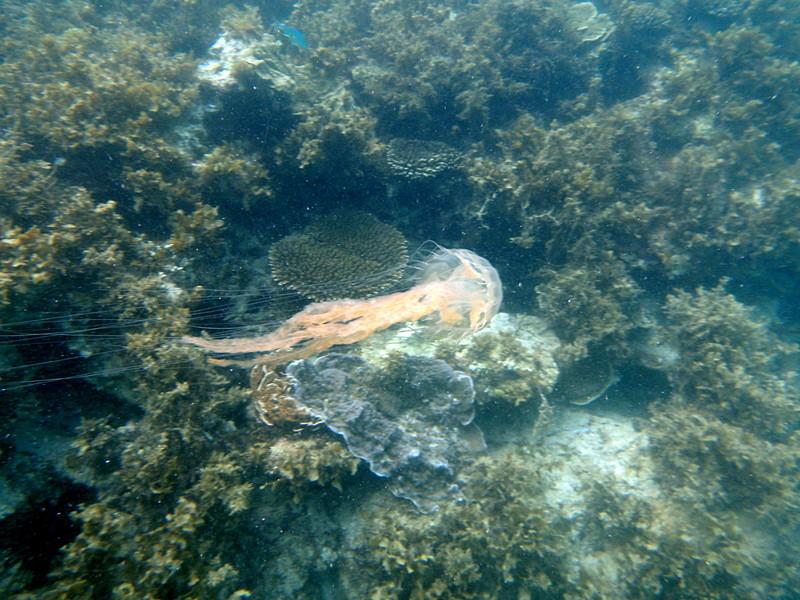 may 02 0174 jelly fish