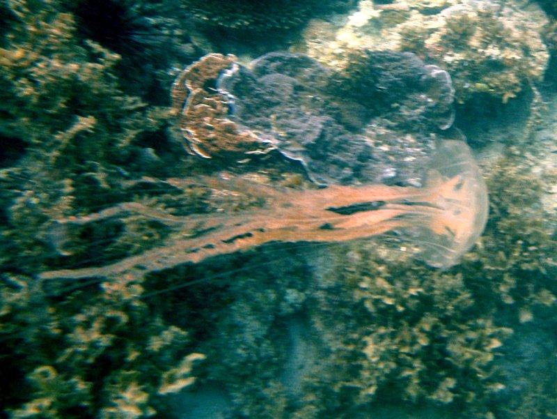 may 02 0175 jelly fish