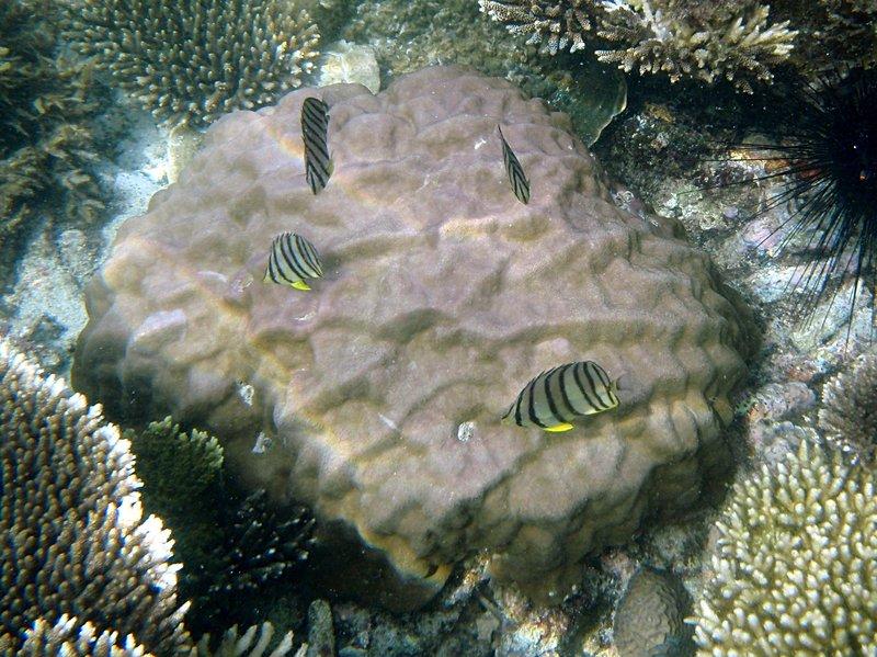 may 02 0202 reef fish