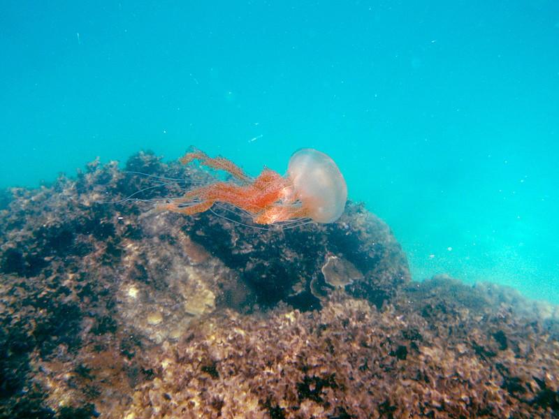 may 02 0231 jelly fish
