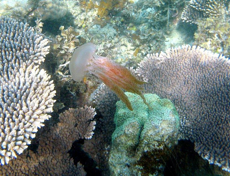 may 02 0337 jelly fish