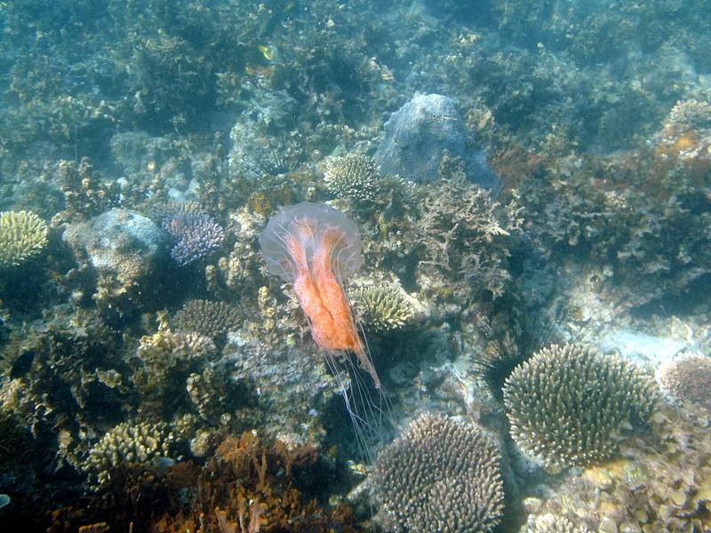may 02 0343 jelly fish