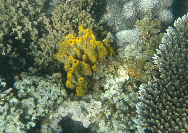 may 02 0376 orange coral