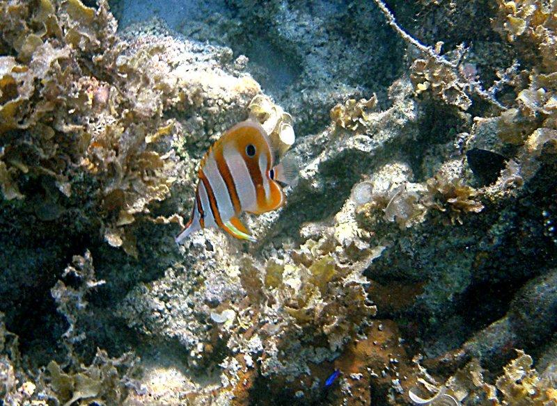 may 02 0422 orange reef fish