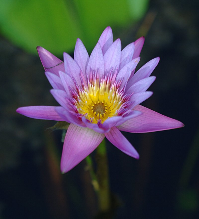 the red lotus of chastity essay The analects of confucius study guide contains a biography of confucius, literature essays, quiz questions, major themes, characters, and a full summary and analysis.