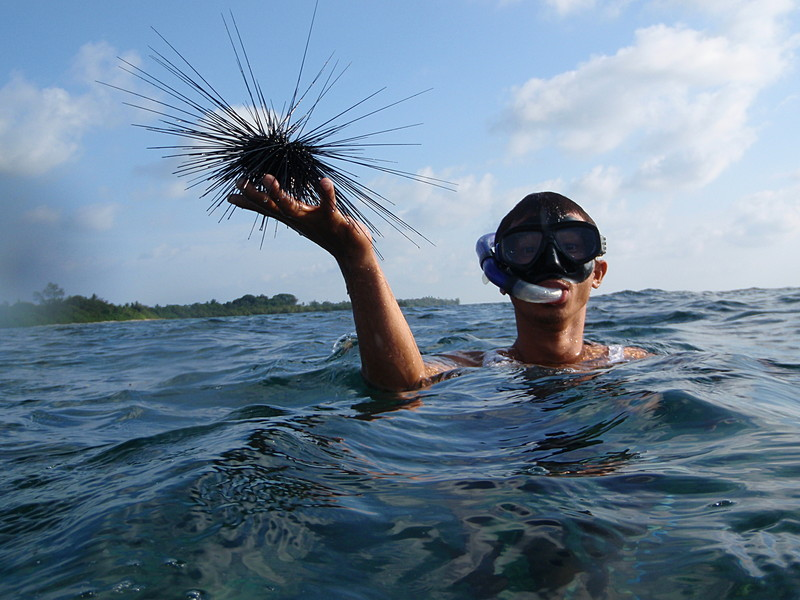 may 04 0034 hari urchin