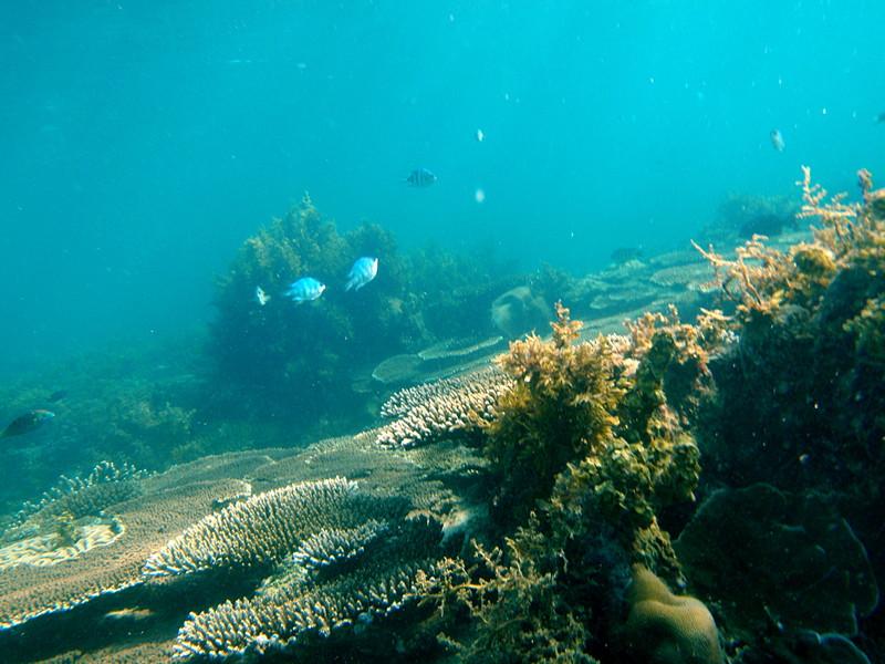 may 04 0068 fish