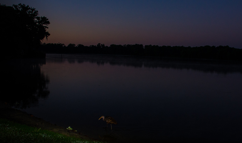 may 05 1767 sunrise limpkin