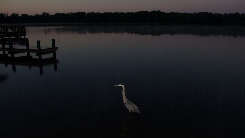 may 05 1795 sunrise tricolor heron