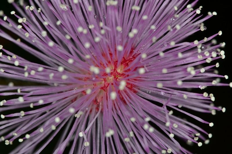 may 05 3251 purple flower