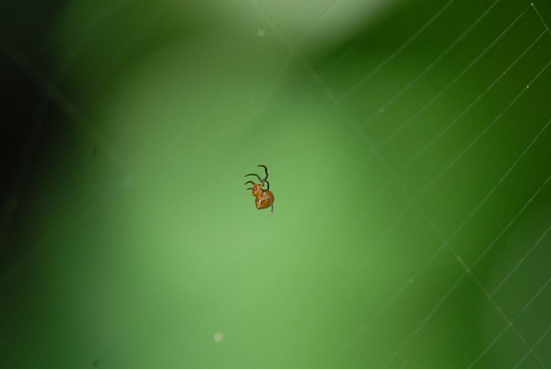 may 05 7763 argyrodes