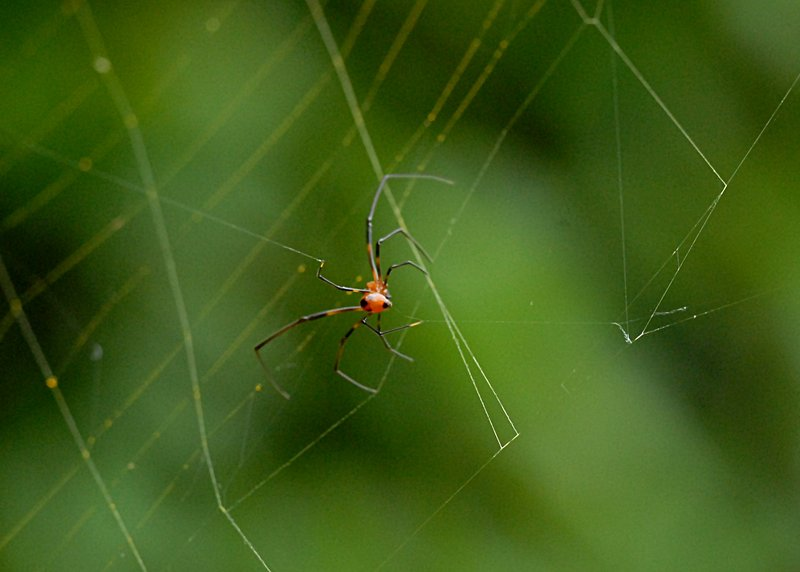 may 05 7967 argyrodes