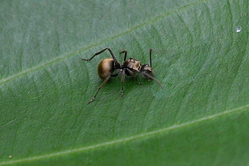 may 05 7996 ant