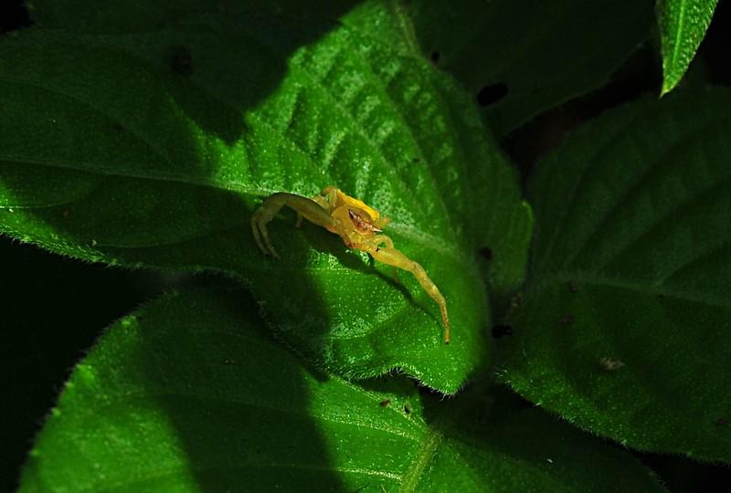 may 08 7016 crab spider