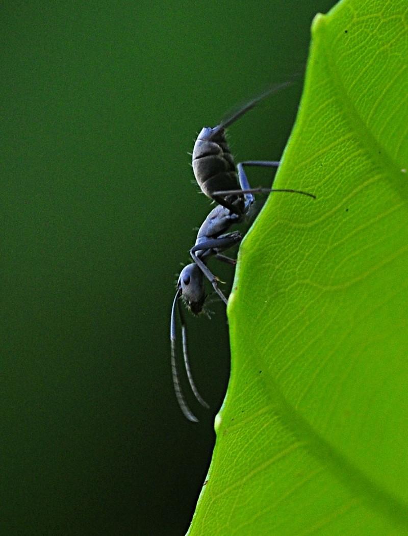 may 08 7240 ant