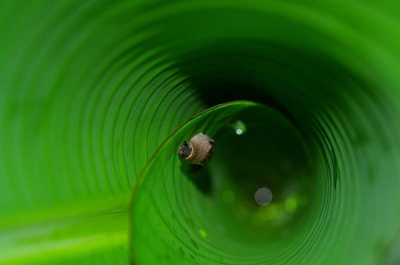 may 08 7302 banana snail