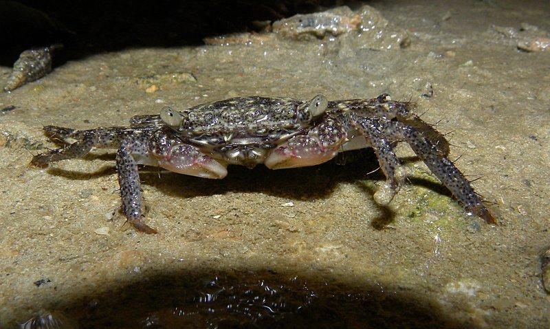 may 10 0802 crab