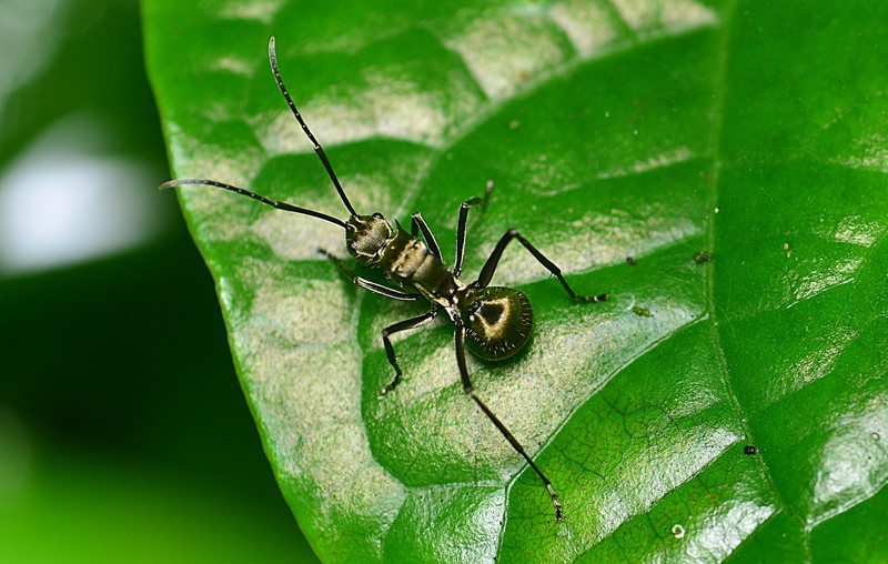 may 10 9480 ant