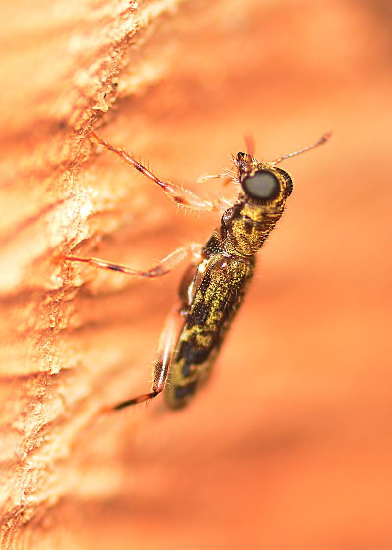 may 10 9508 insect close
