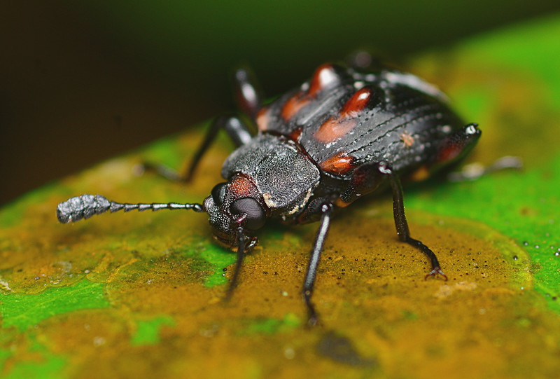 may 10 9551 beetle eye