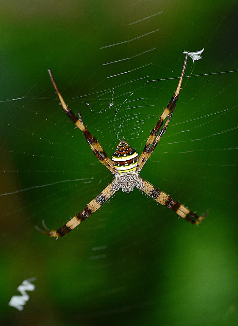 may 10 9643 female argiope