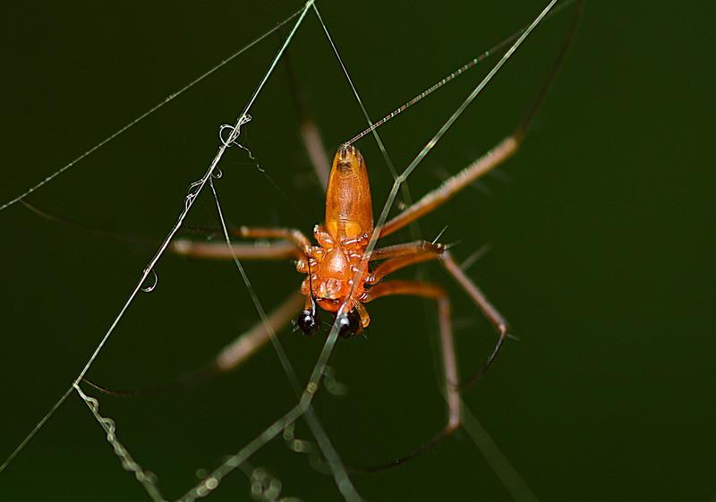 may 10 9670 male nephila