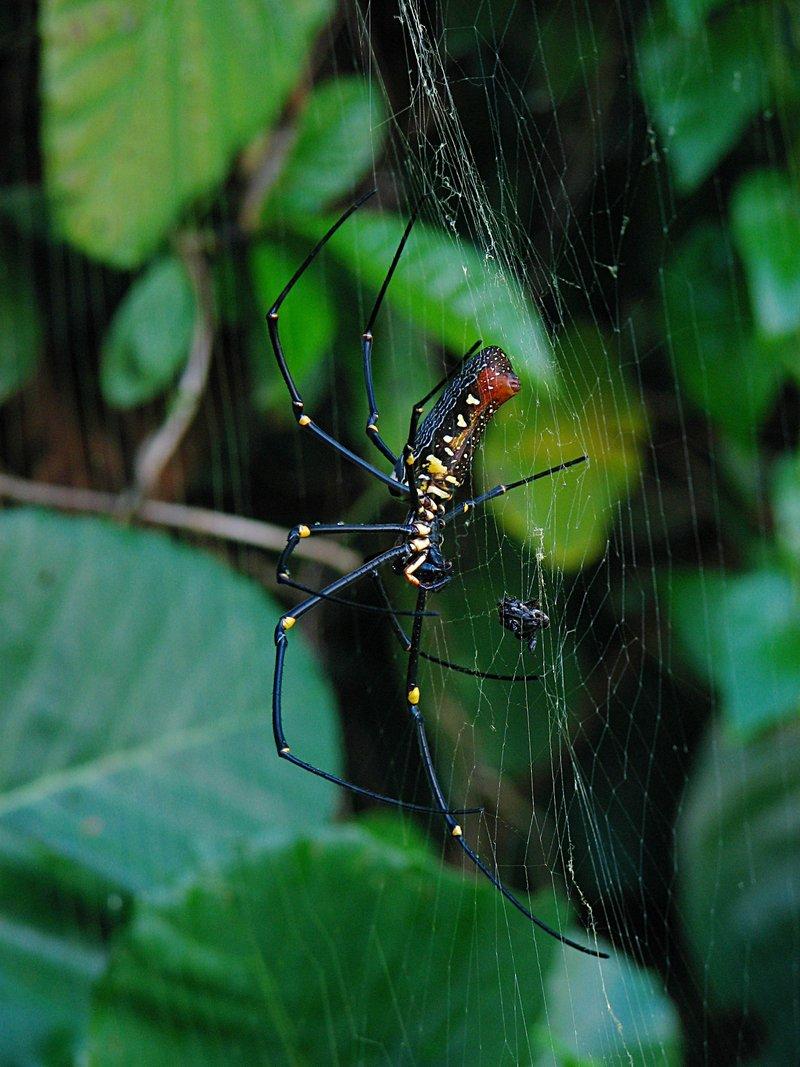 may 12 1073 nephila prey