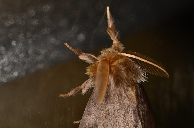 may 12 3285 feather antenna