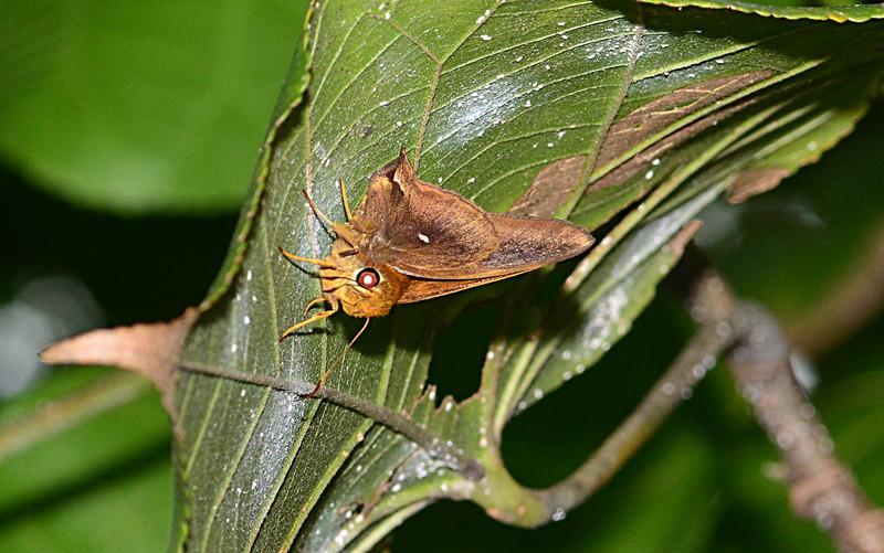 may 12 9774 moth