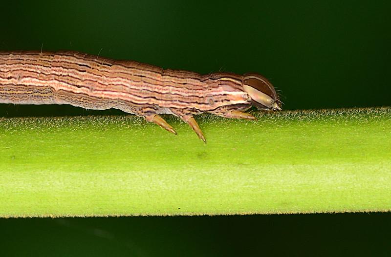may 12 9881 caterpillar eyes