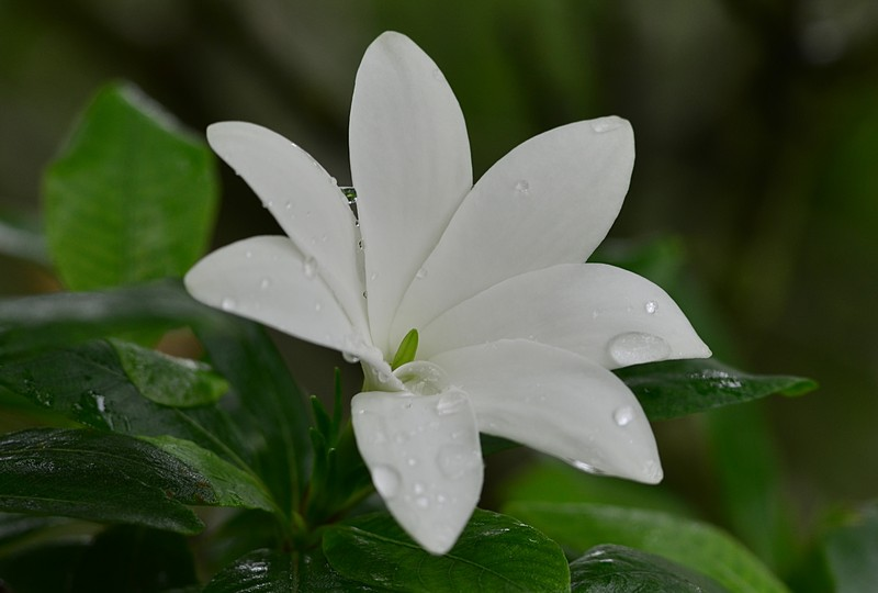 may 13 3363 white flower