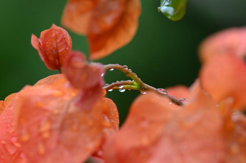 may 13 3391 orange flowers