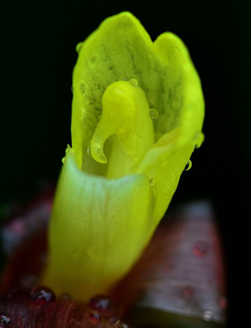 may 13 3448 yellow flower