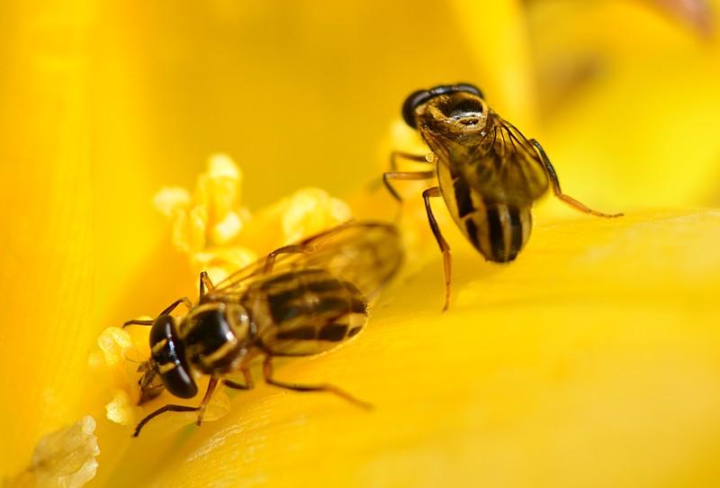 may 13 3566 2 bees