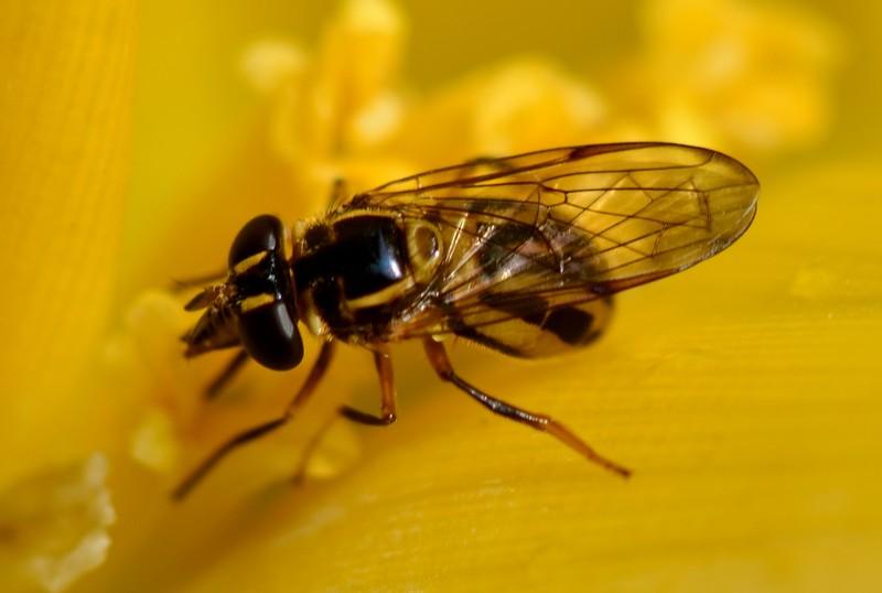 may 13 3567 bee harvesting